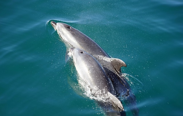 dolphins 2137659 640
