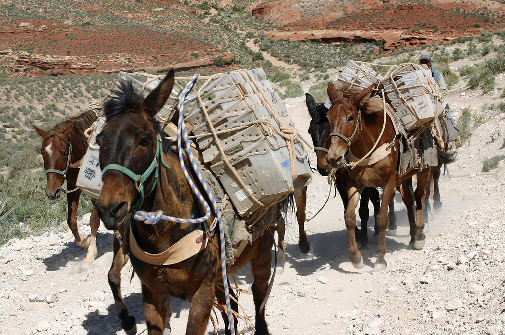 Mules delivering the mail.