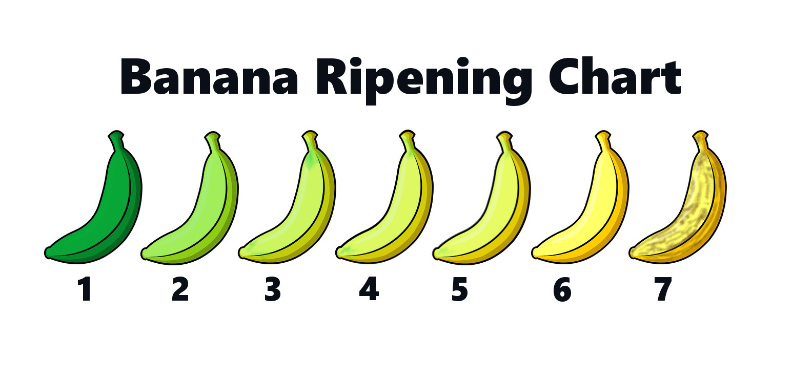 The Journey of a Banana - Knowledge Stew