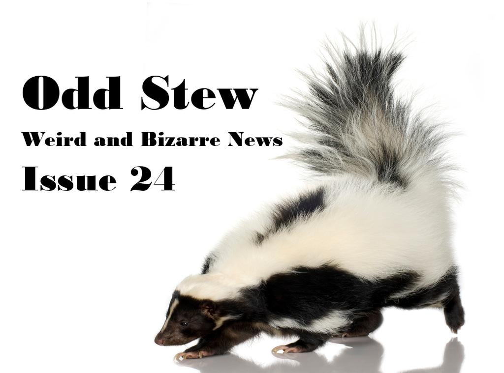striped skunk on white background odd stew issue 24 weird news