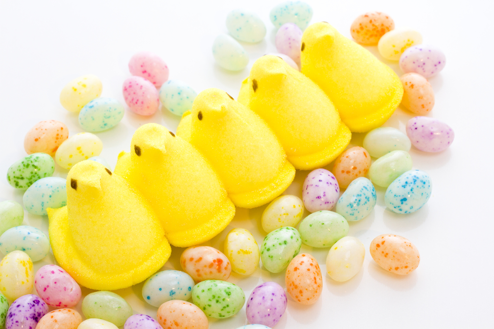 Marshmallow chicks for Easter on a white background.